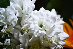 Witte bloesem stock afbeelding