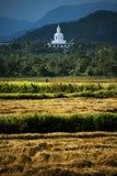 Witte Boedha op de heuvel en havested gebiedsrijst Royalty-vrije Stock Afbeeldingen