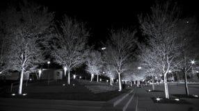 Witte Bomen Stock Afbeelding