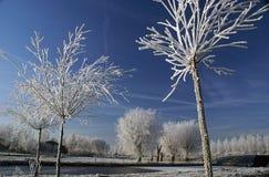 Witte bomen met een blauwe hemel Stock Afbeeldingen