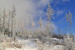 Witte bomen met vorst in een sneeuwland onder wolken en blauwe hemel Stock Foto's