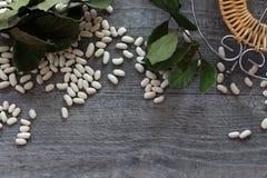 Witte bonen als symbool het gezonde eten Stock Foto