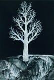 Witte boom bij nacht Stock Afbeelding