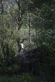 Witte boom onder groene vijanden stock foto