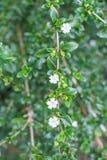 Witte bosbloemen stock afbeeldingen