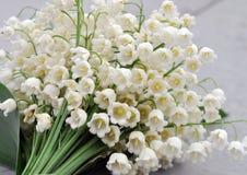 Witte boslelietje-van-dalen Royalty-vrije Stock Afbeelding