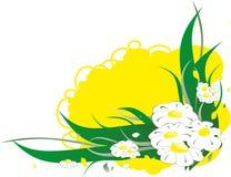 Witte camomiles op de gele achtergrond Royalty-vrije Stock Fotografie