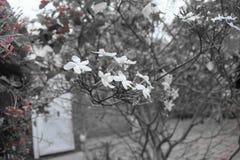 Witte Charmante Bloem stock afbeeldingen