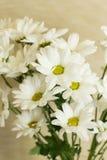 Witte chrysant Boeket stock afbeeldingen
