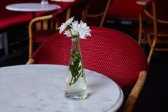 witte chrysant in een witte vaas stock foto