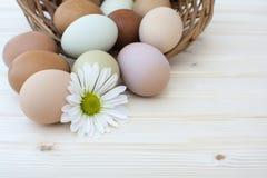 Witte chrysantenbloem en organische chickeneggs op houten bac Royalty-vrije Stock Afbeeldingen