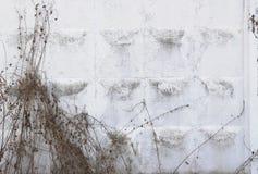 Witte concrete muur Stock Foto
