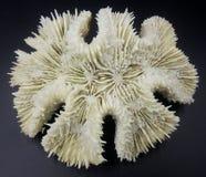 Witte Coral Skeleton royalty-vrije stock foto