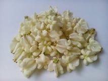 Witte dahlia Stock Fotografie