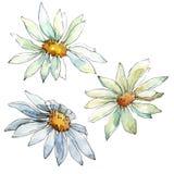 Witte Daisy Flower Bloemen botanische bloem Geïsoleerd illustratieelement stock illustratie