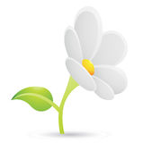 Witte Daisy Flower Icon Stock Afbeeldingen