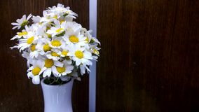 Witte daisys Stock Foto
