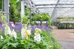 Witte de tuinserre van Ridderspoorinstallaties, Nederland Stock Afbeeldingen