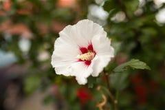 Witte decoratieve bloem Stock Afbeelding
