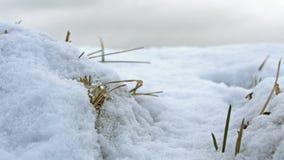 Witte deken Stock Afbeeldingen