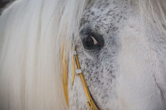 Witte dichte omhooggaand van het paardoog Stock Fotografie