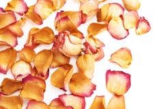 Witte die oppervlakte met roze roze bloemblaadjes en enige knop als romantische samenstelling wordt behandeld als achtergrond Stock Afbeeldingen