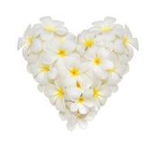 Witte die plumeriabloem in een vorm van hart op witte achtergrond wordt verfraaid Royalty-vrije Stock Afbeelding