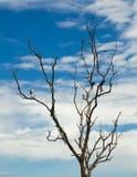 Witte die vogel op een dode boom wordt neergestreken. Stock Foto's