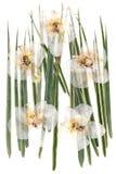 Witte droge orchideebloemen op veelkleurige gedrukte decoratieve groen Stock Afbeelding