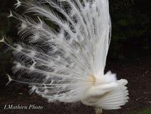 Witte Dromen Royalty-vrije Stock Afbeelding