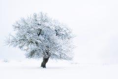 Witte droom Royalty-vrije Stock Fotografie