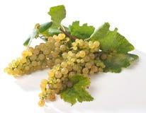 Witte druiven Stock Foto's