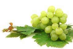 Witte druiven en wat gebladerte stock afbeeldingen