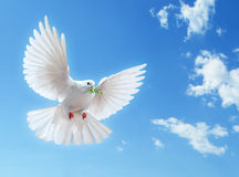 Witte duif in blauwe hemel Royalty-vrije Stock Afbeelding