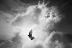 Witte duif die met open vleugels vliegen stock fotografie