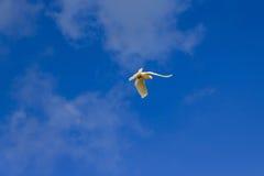 Witte duif op een achtergrond van hemel Stock Fotografie