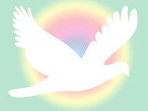 Witte Duif op Pastelkleur Royalty-vrije Stock Afbeeldingen