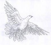 Witte duif - potloodschets Stock Foto's