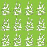 Witte duiven Royalty-vrije Stock Afbeeldingen