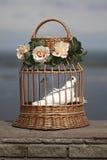Witte duiven in een kooi Royalty-vrije Stock Afbeelding