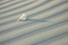 Witte eenzaamheid 2. Shell reeks Royalty-vrije Stock Afbeeldingen