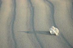 Witte eenzaamheid Stock Foto's