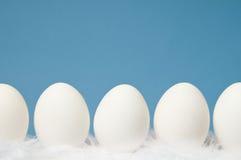 Witte eieren in een rij met blauwe achtergrond Stock Afbeelding