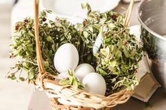 Witte eieren op gras Royalty-vrije Stock Fotografie