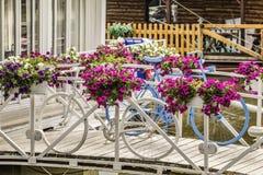 Witte en Blauwe Overschilderde Fiets binnen Levendige Bloemrijke Arra stock fotografie