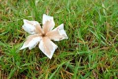 Witte en bruine bloem Stock Afbeelding