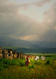 Witte en bruine wild paarden op een gebied. royalty-vrije stock afbeelding