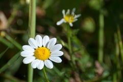 Witte en gele bloem in aard stock fotografie
