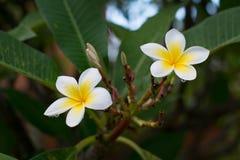 Witte en Gele Bloemen Stock Fotografie