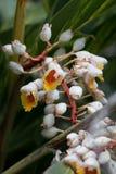 Witte en Gele exotische bloemen stock afbeeldingen